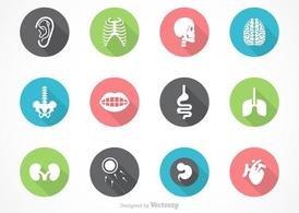 Free Vector Human Anatomy Icon Set