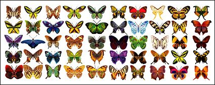 50 beautifully designed butterfly
