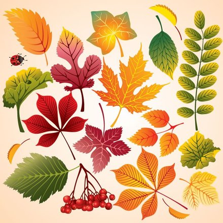 Colorful Autumn Leaves (Free)