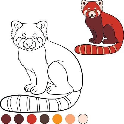 coloring page red little cute red panda vector images red little cute red panda vector images