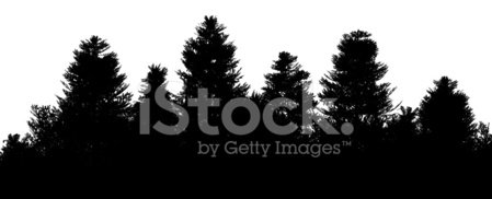 Forest,Silhouette,Pine Tree,Tree,Fir Tree,Grove,Nature,Plant,Christmas Tree,Shape,Landscapes,Nature,Design Element