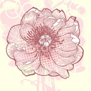 Peony,Flower,Art,Single Flower,Retro Revival,Leaf,Vector,flourishes,Sketch,Ornate,freehand,Ilustration,Petal,Beauty In Nature,Beautiful,Vector Florals,Art Product,Blossoming,Nature,Flowers,Illustrations And Vector Art,Design,Nature,Computer Graphic