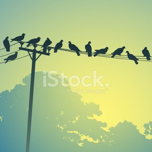 Bird,Power Line,Telephone Line,Cable,Flock Of Birds,Dove - Bird,Pigeon,Silhouette,Pole,Wooden Post,Vector,Telegraph Machine,Telephone,Perching,Landscape,Ilustration,Nature Backgrounds,Birds,Nature,Vector Backgrounds,Tree,Non-Urban Scene,Animals And Pets,Illustrations And Vector Art