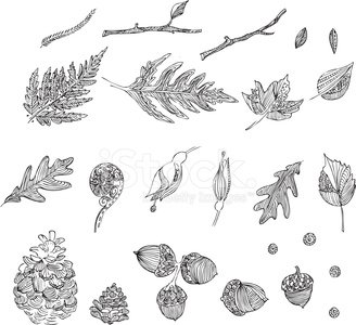 Fern,Leaf,Drawing - Art Product,Acorn,Fiddleheads,Line Art,Pattern,Doodle,Branch,Nature,Autumn,Pencil Drawing,Maple Tree,Oak,Pen And Ink,Forest,Tattoo,Oak Tree,Flower,Woodland,Vector,Single Flower,Ilustration,Indigenous Culture,Funky,Design,Spiral,Illustrations And Vector Art,Swirl,Grunge,Maple,Ornate,Bud,Intricacy,Stem,Computer Graphic,Wood - Material,Nature