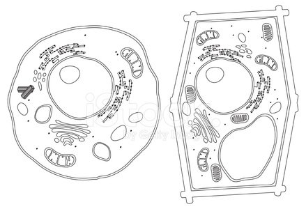 Black And White And Animal Cell Plant Cell Diagram