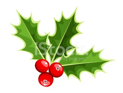 Holly,Berry Fruit,Ilustration,Symbol,Christmas,White Background,Leaf,Cultures,Holiday,Ornate,White,Red,Vector,Design,Decoration,Isolated,Winter,Drawing - Art Product,Design Element,New Year,Season,Plant,Nature,Branch,Green Color