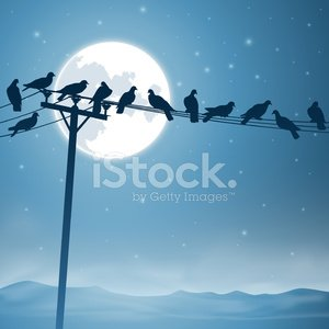 Bird,Cable,Telephone Line,Power Line,Rural Scene,Silhouette,In A Row,Telegraph Machine,Blue,Telephone,Wooden Post,Night,Pigeon,Perching,Flock Of Birds,Star - Space,Moon,Mist,Vector,Non-Urban Scene,Ilustration,Glowing,Pole
