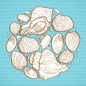 Stone Material,Silhouette,Beach,Drawing - Activity,Summer,Drawing - Art Product,Textured,Group of Objects,Painted Image,Ilustration,Vector,Collection,Wave Pattern,Mollusk,Design Element,Water,Design,Nature,Colors,Contour Drawing,Animal Shell,Backgrounds,Spiral,Color Image,Outline,Seashell,Exoticism,Circle,Sea,Season,Striped,Blue,Cockleshell