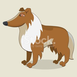 Collie,Side View,Care,Slim,Mammal,legged,Animal,Friendship,Standing,Puppy,Pets,Men,Cute,Dog,Paw,Loyalty