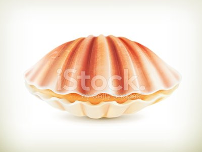 Isolated,Seashell,Mollusk,Animal Shell,Ilustration,Computer Icon,Vector