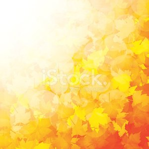 Leaf,Falling,Backgrounds,Autumn,Gold Colored,Brown,Colors,Orange Color,Yellow,Pattern,Red,Textured Effect,Sunbeam,Design,Tree,Lush Foliage,Defocused,Maple,Nature,Sunlight,Vibrant Color,Brightly Lit,Vector,Abstract,Design Element,Multi Colored,Outdoors,Saturated Color,Season,Autumn Collection,Bush,Maple Tree,Branch,Bright