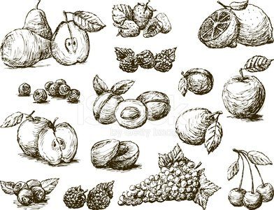 Sketch,Blueberry,Blackberry,Apricot,Plum,Fruit,Raspberry,Lemon,Drawing - Art Product,Pear,Strawberry,Peach,Cherry,Apple - Fruit,Isolated On White,Food,Healthy Eating,Gourmet,Grape