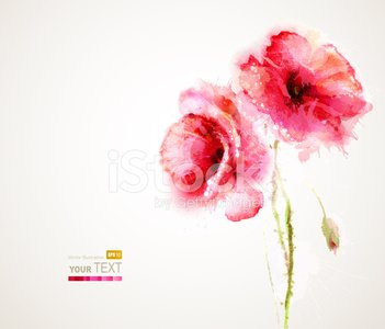 Watercolor Painting,Flower,Poppy,Computer Graphic,Springtime,Birthday,Beauty In Nature,Paint,Bouquet,Drawing - Art Product,Abstract,Wallpaper,White,Plant,Red,Banner,Greeting Card,Pink Color,Nature,Design,Image,Art,Backgrounds,Ilustration,Flower Head,Summer,Blossom,Blob,Poster,Botany