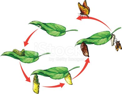 Butterfly - Insect,Caterpillar,Life Cycle,Monarch Butterfly,Biodiversity,Cartoon Animals,insect collection,Butterfly Wings,Butterfly Flying,Butterfly Isolated,Insect,Butterfly Flying,Development Process,Education,Butterfly Flying,Caterpillar Butterfly,Insect Close Up,Zoology,Biology,People,Science,Leaf