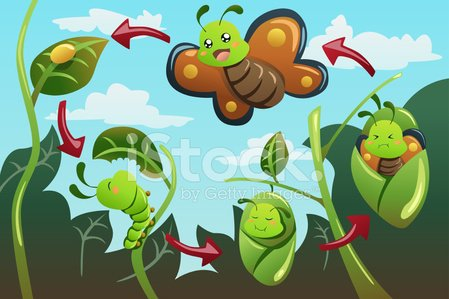 Butterfly - Insect,Life Cycle,Caterpillar,Cocoon,Animal Egg,Evolution,Biology,Development,Change,Cartoon,New Life,Modern,Growth,Newborn Animal,Education,Vector,Arthropod,Invertebrate,Ilustration,Pupation,Entomologist,Clip Art,Drawing - Art Product,Insect,TimeBrief2013,Life,Outdoors,Worm,Animal,Nature