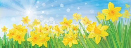 Daffodil,Grass,Sunlight,Sun,Sky,Springtime,Banner,Blue,Flower,Yellow,Shiny,Plant,Illuminated,Leaf,Defocused,Blossoming,Season,Landscape,Frame,Sunny,Scenics,Backgrounds,Ilustration,Green Color,Vibrant Color,Nature,Horizontal,Sunbeam,Blooming,Vector,Design,Petal,Blossom,Beauty In Nature,Steam
