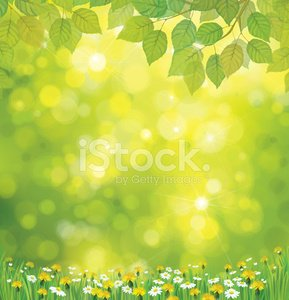 Birch Tree,Backgrounds,Season,Springtime,Landscape,Leaf,Chamomile Plant,Flower,Lawn,Vector,Summer,Sunlight,Grass,Scenics,Easter,Daisy,Dandelion,Chamomile,Sky,Beauty In Nature,Sun,Nature,Defocused,Shiny,Green Color,Design,Yellow,Vertical,Tree,Weed,Illuminated,Meadow,Field,Plant,Day,Sunny