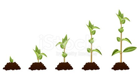 Seedling,Life Cycle,Tree,Growth,Plant,Changing Form,Lifestyles,New Life,Leaf,Small,Life,Botany,Change,Freshness,Development,Concepts,Progress,isolated objects,New,White,Ideas,Agriculture,Nature,Backgrounds,Evolution,Mud,Gardening,Cultivated,Stem,Environment,Multiple Image,Image Sequence,Green Color,Vector,No People,Inspiration,Dirty