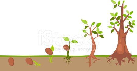 Seedling,Tree,Growth,Child,Catwalk - Stage,Leaf,Plant,Root,Development,Vector,Sapling,Seed,Animal Trunk,Botany,Green Color,Isolated,Ilustration,Formal Garden,Environment,Springtime,Organic,Lush Foliage,Small,Gardening,Life,Agriculture,Part Of,Branch,Freshness,Bud,Plantation,Healthcare And Medicine,Vegetable Garden,White,New,Care,Symbol,Nature,Hope,editable,Stem