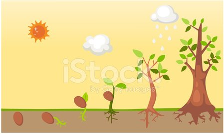 Seed,Growth,Tree,Plant,Bud,Springtime,Root,Agriculture,Nature,Development,Animal Trunk,Cloud - Sky,Hope,Sapling,Freshness,Child,Stem,Leaf,Botany,Ideas,Gardening,Life,Symbol,Lush Foliage,Rain,Branch,White,Care,Plantation,Green Color,New,Small,Part Of,Seedling,Sun,Vector,Organic,Environment,Healthcare And Medicine,Formal Garden,editable,Catwalk - Stage