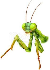 Praying Mantis,Mantoptera,Mantes,Raptorial Legs,Vector,Thigh,Cockroach,pterygota,Image,Computer Graphic,Science,Animal,Insect,Neoptera