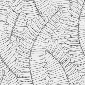 Flower,Vector,Woodcut,Pattern,Floral Pattern,Wallpaper Pattern,Leaf,Wallpaper,Tropical Climate,Single Flower,Palm Tree,Engraved Image,Branch,Autumn,Fern,Textile,Elegance,Ink,Drawing - Activity,Design,1940-1980 Retro-Styled Imagery,Lush Foliage,Outline,Frond,Decor,White,Color Image,Plant,Textured Effect,Sketch,Seamless,Ilustration,Falling,Part Of,Repetition,Ornate,In A Row,Design Element,Colors,Style,Invitation,Computer Graphic,Stencil,Abstract,Fashion,Grass,Houseplant,Striped,Bush,Black Color,Silhouette,Greeting Card,Backgrounds,Contour Drawing,Textured,Retro Revival