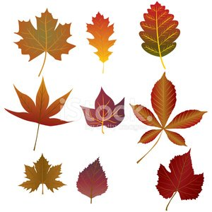 Oak Leaf,Plane Tree,Birch,Birch Tree,Gold Colored,Floral Pattern,Set,Brown,Red,Plant,Chestnut,birch leaves,Maple Leaf,Orange Color,Isolated On White,Silhouette,Autumn,Leaf,autumn leaves,Yellow,Season,Chestnut Tree