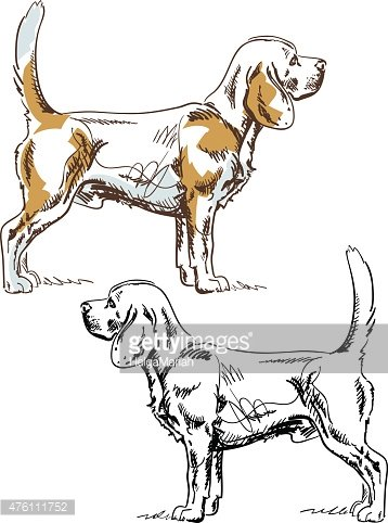 Side View,Drawing - Art Product,Animal,Standing,Dog,Purebred Dog,Beagle,Pen And Ink,Illustration,Sketch,Male Animal,Vector,Pets,Scribble,2015