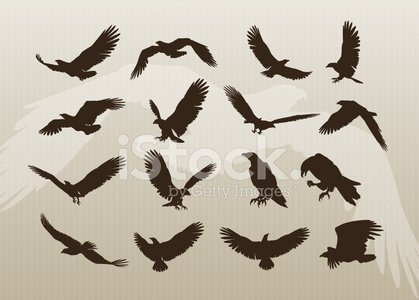 Eagle - Bird,Bird,Flying,Silhouette,Wing,Vector,Symbol,Feather,Back Lit,Birds Flying in V-Formation,Bald Eagle,Bird of Prey,Animal,Outline,Freedom,Landing - Touching Down,Diving,Ilustration,Talon,Shape,Profile View,Backgrounds,Flapping,Pattern,Colors,Clip Art,Color Image,Design,Above,Wildlife,Nature,Gliding,Aggression,Set,Collection,High Angle View,Group Of Animals,Outdoors,Catching,Large Group Of Animals,Spreading,Birds,Grace,Animal Backgrounds,Free Flying,Animals And Pets,Wild Animals