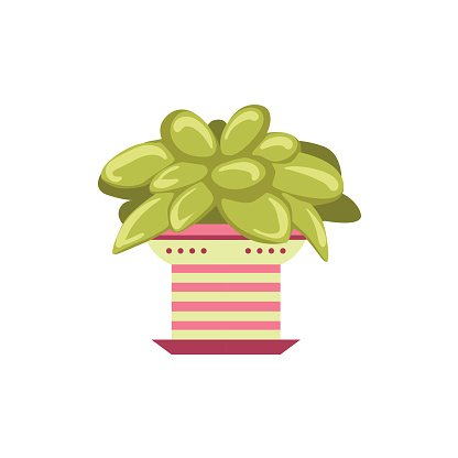 Multi Colored,Desert,Evergreen Tree,Shape,Vector,Label,Fun,Plant,Orange Orchard,White,Isolated,Backgrounds,Succulent Plant,Cute,Indoors,Leaf
