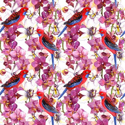 Multi Colored,colorfull,Bird,Backgrounds,Seamless,Watercolor Painting,Watercolor Paints,Computer Graphic,Purple,Red,Pattern,Parrot,Illustration,Orchid,Repetition
