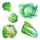 Cut Out,Square,Art,Watercolor Painting,Watercolor Paints,Ripe,Art And Craft,Leaf,Raw Food,Food,Drawing - Activity,Group Of Objects,Drawing - Art Product,Lettuce,Illustration,Cabbage,Green Color