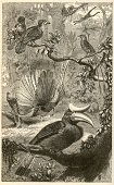 Tropical Rainforest,Old-fashioned,Lithograph,Retro Revival,Animal,Engraved Image,Peacock,Malaysia,Ilustration,Sketch,Old,Tropical Bird,Victorian Style,Bird,Animal Themes,Hornbill,Science,Rainforest,Antique,Vertical,Nature,Variation,Birds,Inks On Paper,Wild Animals,Pencil Drawing,Asia,Southeast Asia,Zoology,Biology,Animals And Pets,Group Of Animals,Design Element