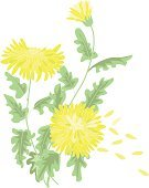 Chrysanthemum,Flower,East Asian Culture,Autumn,Plant,Blossom,Yellow,Vector,Leaf,Nature,Ilustration,Creativity,Flowers,Vector Florals,Nature,Illustrations And Vector Art,Beauty In Nature,Fantasy