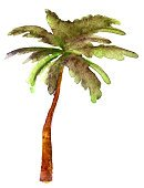 81352,Palm Branch,Vertical,Cut Out,No People,Plant,Palm Tree,Palm Leaf,Illustration,Nature,Tree,Single Object