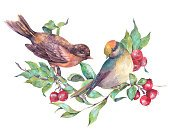 Horizontal,No People,Watercolor Painting,Bird,Berry Fruit,Illustration,Christmas