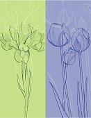 Tulip,Iris,Flower,Plant,Sketch,Pen And Ink,Line Art,Engraving,Drawing - Art Product,Ilustration,Design,Art,Design Element,Isolated,Elegance,Spring,Flowers,Nature Backgrounds,hand drawn,freehand,Set,Nature