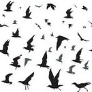 Square,Freedom,Silhouette,Crow - Bird,Background,Animal Wing,Outdoors,Animal Wildlife,Animal,Seagull,Wind,Illustration,Nature,Pigeon,Animal Markings,Sky,Group Of Animals,Flying,Seamless Pattern,Bird,Decoration,Dove - Bird,Kingfisher,Songbird,Backgrounds,Flock Of Birds,Animal Body Part,Starling,Aerial View,Pattern,Black Color