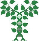 doublehelix,Vertical,Symmetry,Individuality,Choice,Change,Molecule,Editor,Agriculture,Biotechnology,Plant,Spiral,Medicine,Sign,Molecular Structure,Alternative Medicine,Healthcare And Medicine,Science,Illustration,Nature,Leaf,Chromosome,Computer Icon,Symbol,Medical Exam,Customized,Helix,Genetic Research,Vine - Plant,Caduceus,Doctor,Helix Model,Root,Tree,Research,Vector,DNA,Genetic Modification,Intertwined,Green Color