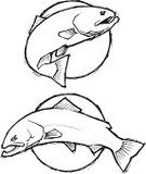 Trout,Salmon,Fish,Fishing,Sketch,Doodle,Black And White,Vector,peche,Freshwater Fish,Ilustration,Icon Set,Speckled Trout,Cutthroat Trout,Rainbow Trout,Drawing - Art Product,Brown Trout,Computer Graphic,Saltwater Fish,Simplicity,Variation,Illustrations And Vector Art,Bull Trout,Swimming Animal,Vector Ornaments,Lake Trout,Vertical,Fishing Industry,Clip Art,Vector Icons,Sport Fish,Isolated On White,Profile View,Image