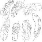 61814,Horizontal,No People,Feather,Illustration,Nature,Beauty In Nature,Vector,Drawing - Art Product,White Color,Black Color