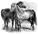 Horse,Ilustration,Engraving,Engraved Image,Old-fashioned,Retro Revival,Classic,Paintings,Victorian Style,Herd,Photograph,Animal,Line Art,Pattern,Running,Hoof,Black And White,Image Created 19th Century,Tail,Mammal,Clip Art,Old,Close-up,Side View,Design,Design Element,Illustrations And Vector Art,High Contrast,pack animal,Image,grazer,Draft Animal,Hoofed Mammal,Horizontal,No People,Domestic Animals,Cut Out,Studio Shot,White Background,Farm Animals,Animals And Pets,quadruped,Isolated On White