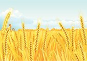 Wheat,Field,Cereal Plant,Farm,Straw,Ilustration,Backgrounds,Vector,Whole Wheat,House,Landscape,Autumn,Agriculture,Harvesting,Stem,Environment,Crop,Landscaped,Plant,Water Tower - Storage Tank,Season,Leaf,Clip Art,Sky,Rye,Growth,Day,Rural Scene,Outdoors,Landscapes,Horizon Over Land,Summer,Nature,Illustrations And Vector Art,No People,Holidays And Celebrations,Nature,Horizontal,Tranquil Scene,Thanksgiving,Yellow