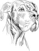 Dog,Sketch,Drawing - Art Product,Great Dane,Ilustration,Pencil Drawing,Pencil,Animal Head,Line Art,Scribble,Pen And Ink,Hand-drawn,Canine
