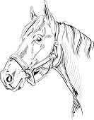 Horse,Animal Head,Clip Art,Drawing - Art Product,Sketch,Pencil Drawing,Ilustration,Vector,Line Art,White Horse,Halter,Thoroughbred Horse,Ink,Stallion,Mane,Hand-drawn,Scribble