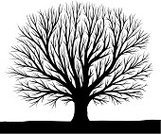 Tree,Bare Tree,Silhouette,Outline,Winter,Vector,Branch,Art,Clip,Autumn,Forest,Black Color,Growth,Leaf,Computer Graphic,Loneliness,Backgrounds,Nature,Ilustration,Clip Art,Solitude,Land,Shade,Painted Image,Design Element,defoliated,Concepts And Ideas,Time