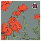 Poppy,Summer,Flower,Plant,Red,Ilustration,Gardens,Vector Backgrounds,Flowers,Nature,Illustrations And Vector Art,Nature