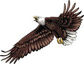 Eagle - Bird,Feather,Courage,Talon,Claw,Aggression,Bird,Birds,Vector Cartoons,Wild Animals,Illustrations And Vector Art,Animals And Pets,Pride
