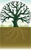 Oak Tree,Tree,Oak,Root,Branch,Dirt,Plant,Deciduous Tree,Environment,Nature