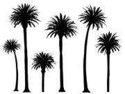 Palm Tree,Tree,Vector,Black Color,Black And White,Design Element,Tree Trunk,Leaf,Nature,Collection,Nature,Vector Florals,Vector Ornaments,Illustrations And Vector Art,Set,No People,Group of Objects,graphic elements